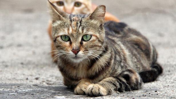 Sterylizacja i kastracja zwierząt cieszy się duzym zainteresowaniem Shutterstock