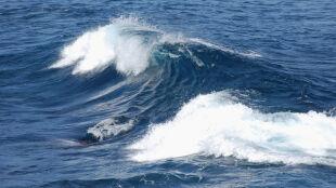 """Wieloryb wyrzucił surfera w powietrze. """"To było niesamowite"""""""